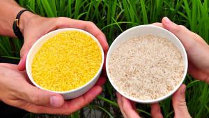 Altın Pirinç'in ayarı kaç?